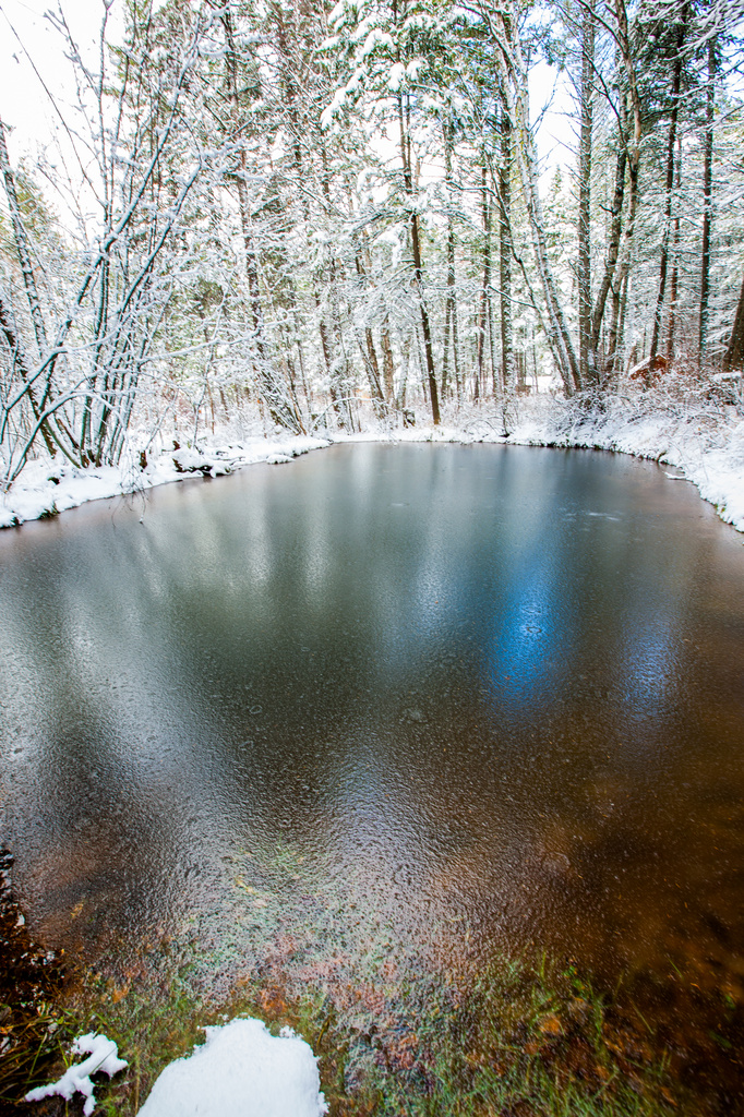Winter Pond by grizzlysghost