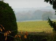 17th Nov 2013 - A misty morning...