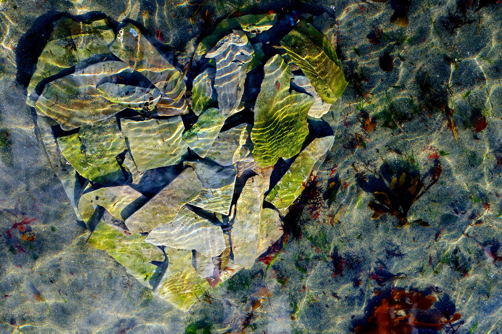 Water heart by kwind