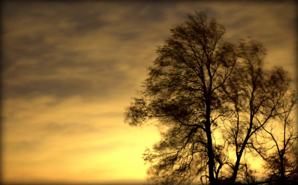 A Windy Night by jayberg