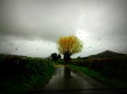 18th Nov 2013 - A rainy day...