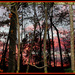 Sunset through the woods by vernabeth