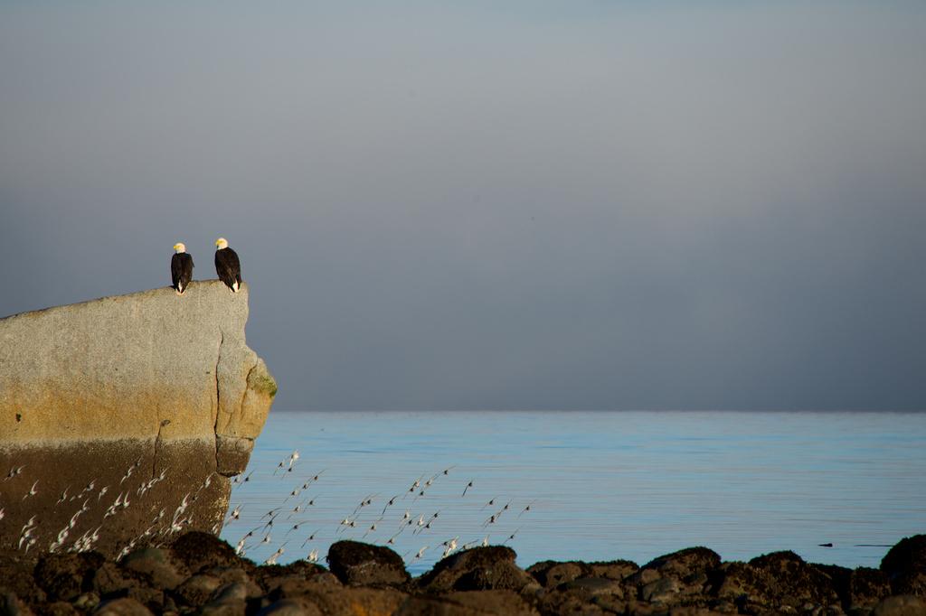 More birds by kwind
