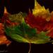 Leaf's by tonygig