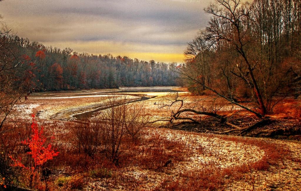 Barren Beauty by sbolden