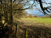 21st Nov 2013 - A walk in the Mortimer forest.....