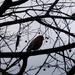 Morning Bird by linnypinny