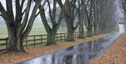 23rd Nov 2013 - This Road