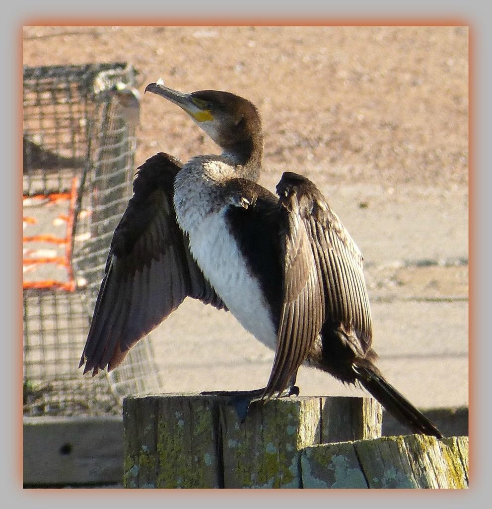 the last cormorant by quietpurplehaze