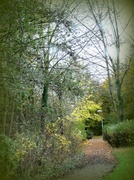 23rd Nov 2013 - Down to the woods