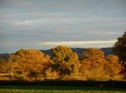 23rd Nov 2013 - Shades of Autumn....