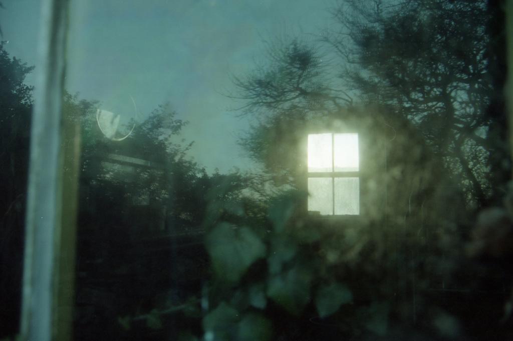 window ivy by ingrid2101