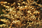 25th Nov 2013 - Bokeh in the afternoon light