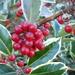 seasonal by quietpurplehaze