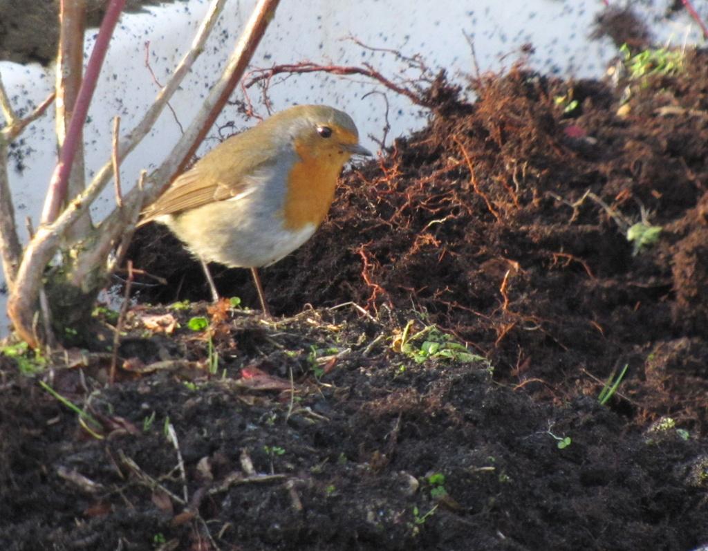 Robin in the bath by busylady