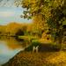 Paddy's Morning Walk by tonygig