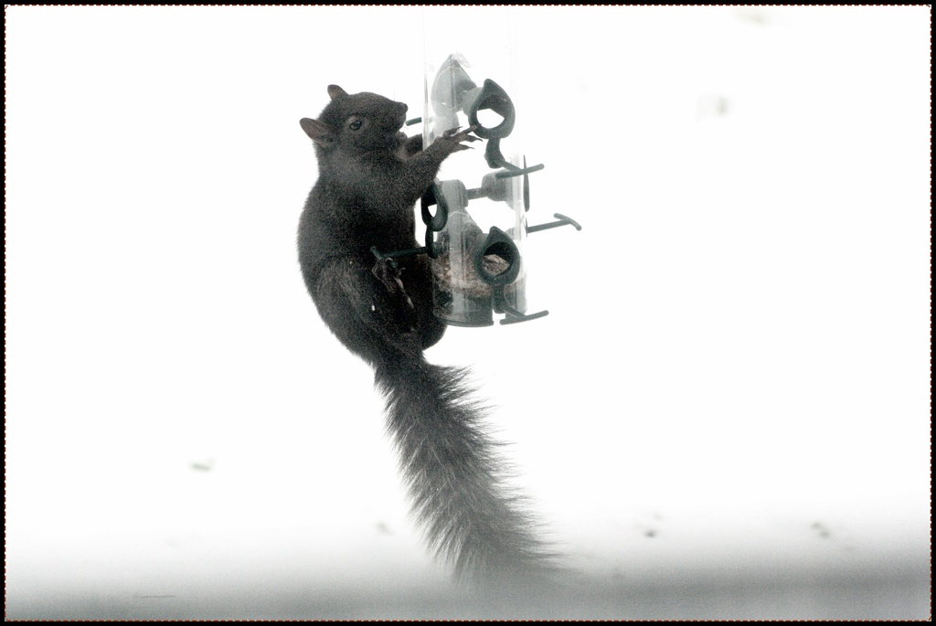 Another squirrel picture by bruni