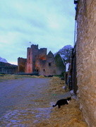 29th Nov 2013 - The cat at the castle...