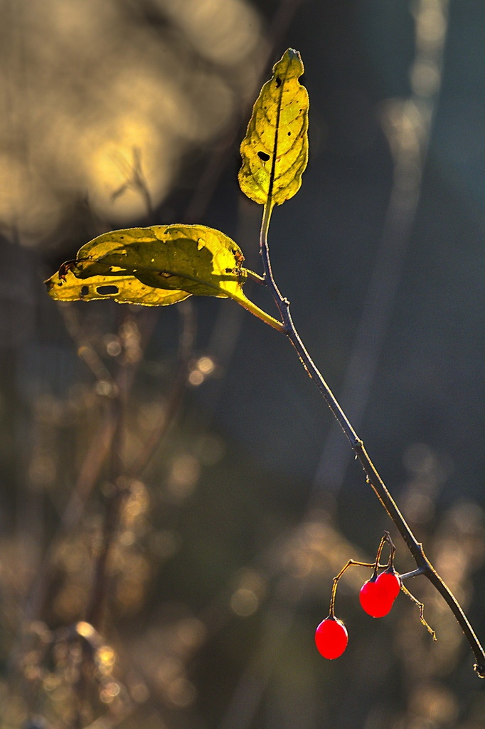 Early Morning Light. by gamelee