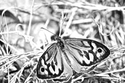 1st Dec 2013 - butterfly