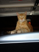 12th Sep 2010 - The Life of a Cat