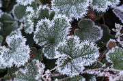4th Dec 2013 - Morning Frost