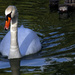 swan song by pdulis