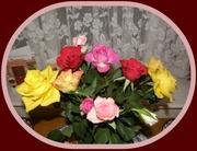 9th Dec 2013 - Roses