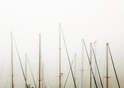 9th Dec 2013 - Amassed in fog