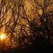 Sun, sun, sun, here it comes by genealogygenie
