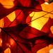 Leaves by shepherdmanswife