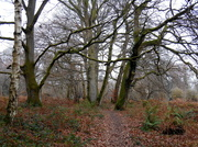 11th Dec 2013 - A walk in Mortimer forest....