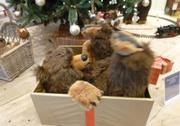 6th Dec 2013 - A bear in a box