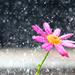Summer rain by spanner