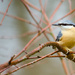 Nuthatch - 16-12 by barrowlane