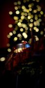 15th Dec 2013 - wonderland express