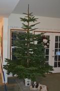 19th Dec 2013 - Christmas Tree - V