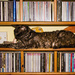 Cat-aloguing my CDs by shepherdman