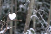 20th Dec 2013 - I LOVE the First Snowfall!!