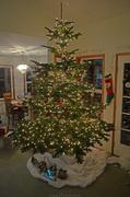 21st Dec 2013 - Christmas Tree - VII