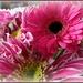 birthday flowers  by quietpurplehaze