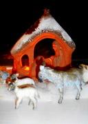 21st Dec 2013 - Away in a manger....
