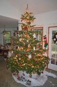 22nd Dec 2013 - Christmas Tree - VIII