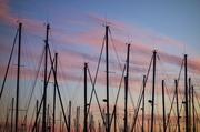 20th Dec 2013 - Masts fence