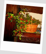 22nd Dec 2013 - Deck the halls with boughs of holly....