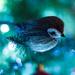 Bird by rodm