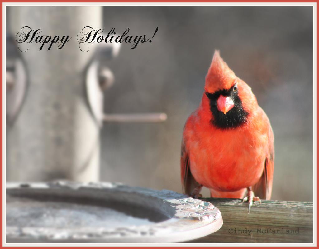 Happy Holidays! by cindymc