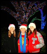 22nd Dec 2013 - Zoo Lights