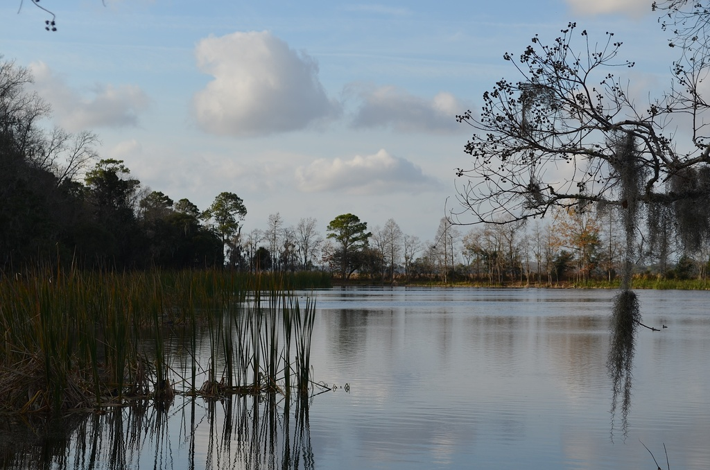 DSC_0355 by congaree