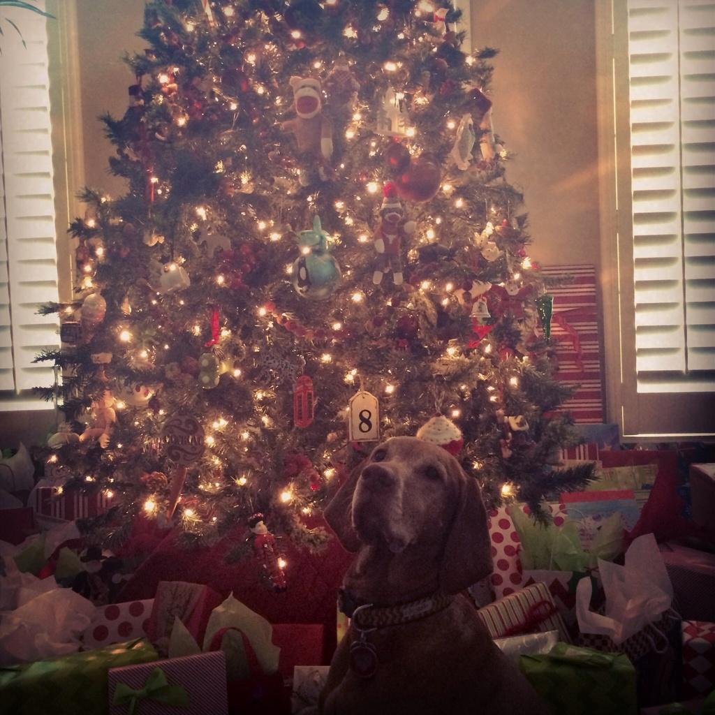 Merry Christmas  by lisaconrad